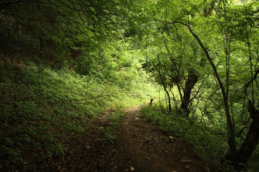 Când ieși din sat spre pădure în munții Almajului