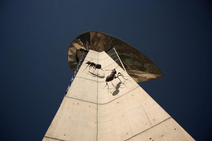 Furnici pe turnul din Muzeul Științelor, Granada