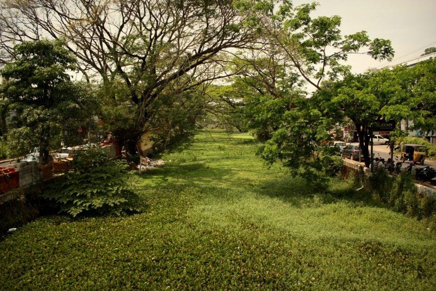 Canalele din Allepey, acoperite de vegetație, Kerala, India