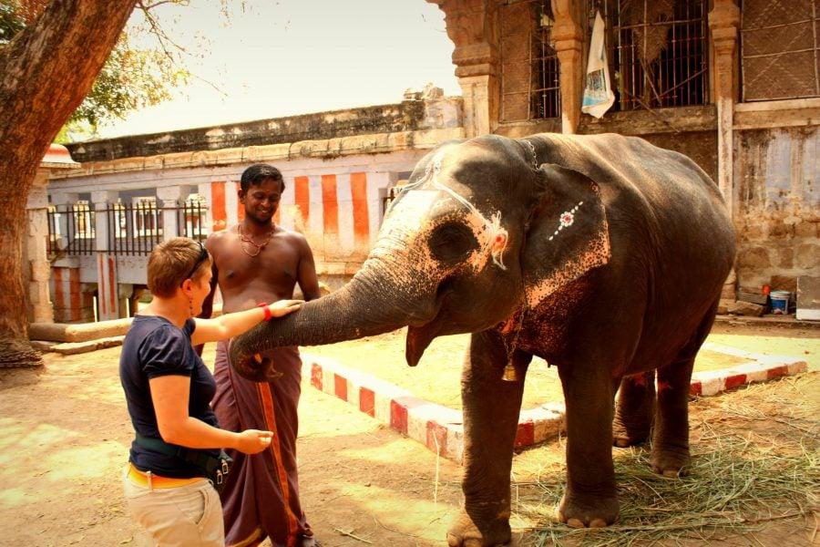 Turistă mângaie un elefantul blând, templul Jambukeswarar, Trichy, Tamil Nadu, India