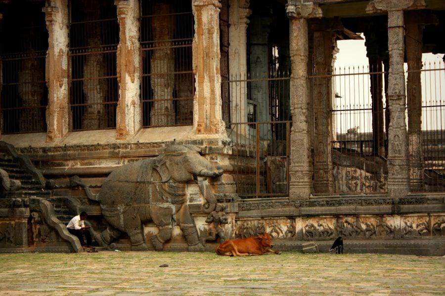 Om, elefant, vacă și capră coexistand armonios în templul Nataraja, Chidambaram, Tamil Nadu, India