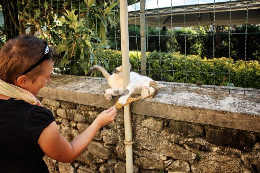 Și pisicile italiene știu să se joace, Varese Ligure, Italia