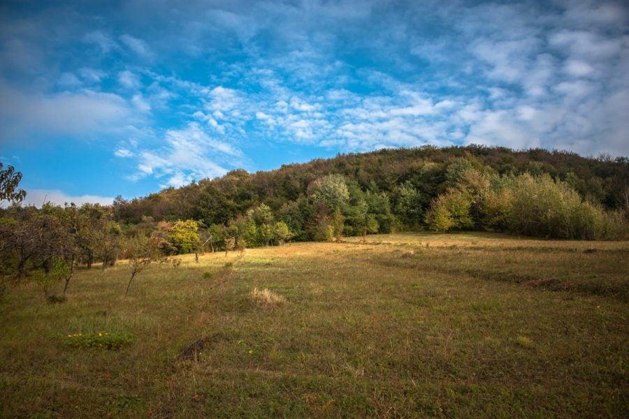 Limită prioprietate teren pădure