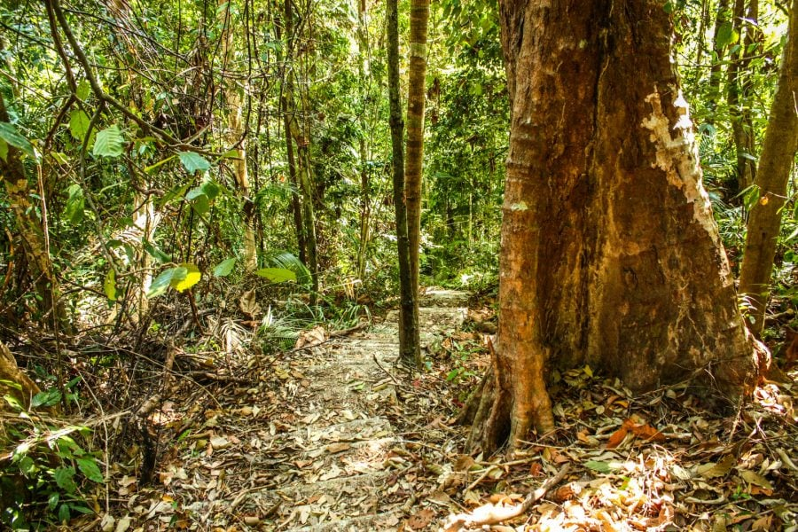 Plimbare prin jungla din Langkawi