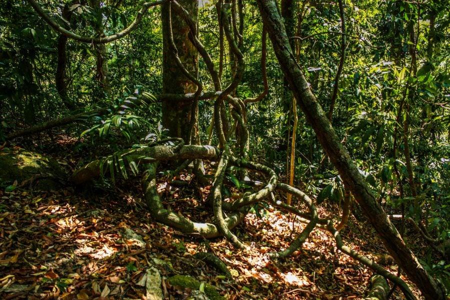 Pădurea tropicală din Langkawi, Malaezia
