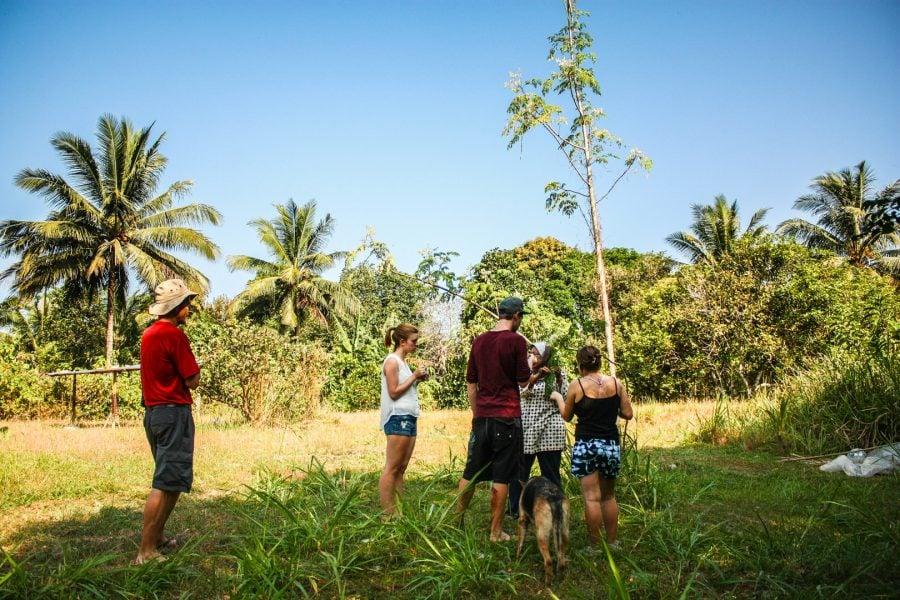 Voluntari la o gradină tropicală