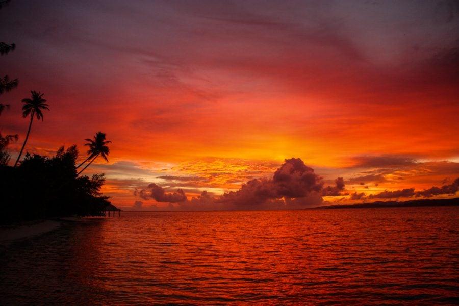 Apus roșiatic în insulă tropicală, Mansuar, Raja Ampat, Papua