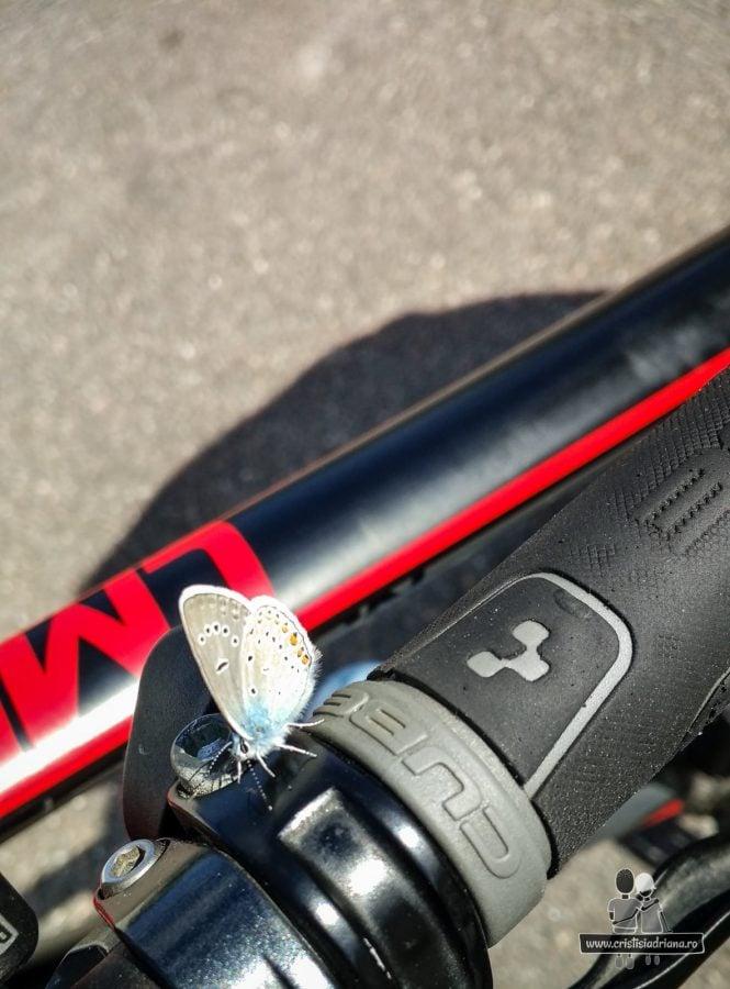 Fluture pe bicicleta