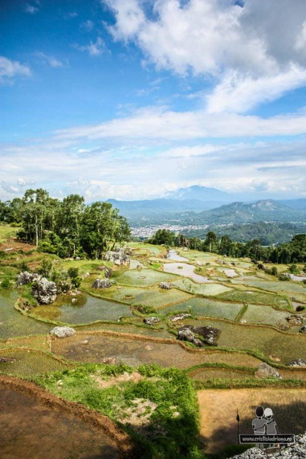 Orezărie irigată în Indonezia