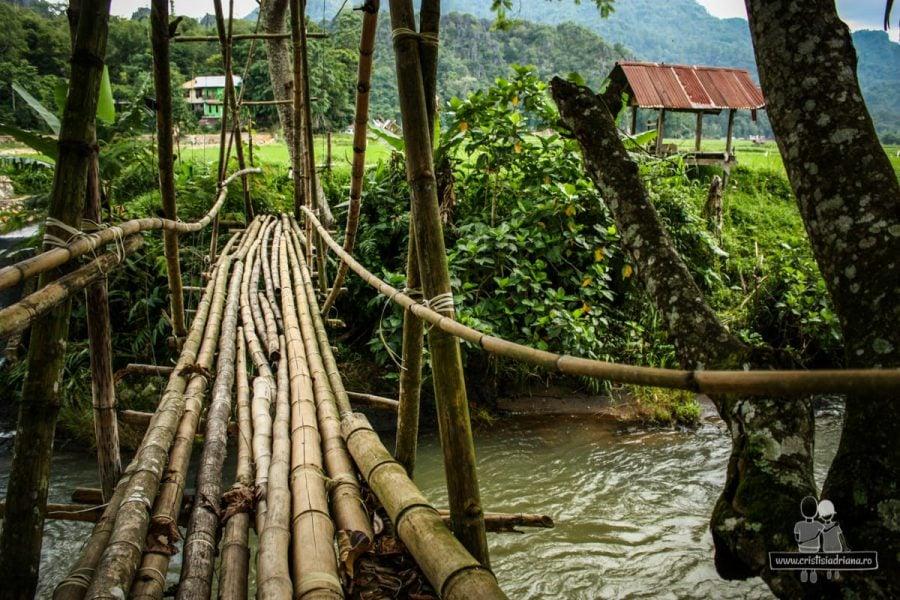 Pod de bambus