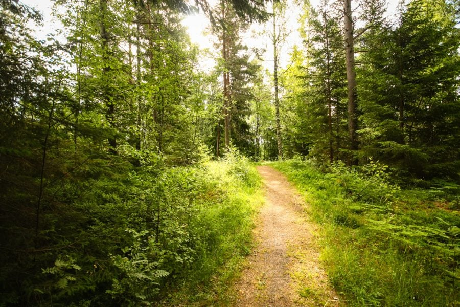 Potecă în pădure în Suedia