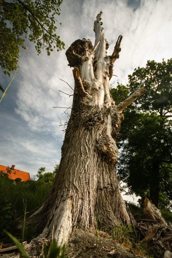 Un copac în Suedia