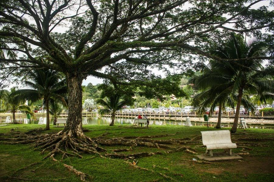 Copac și bancă