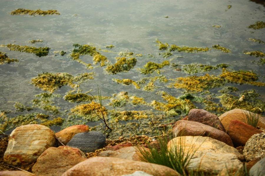 Mlaștini cu alge termofile în Ayer Hangat, Langkawi