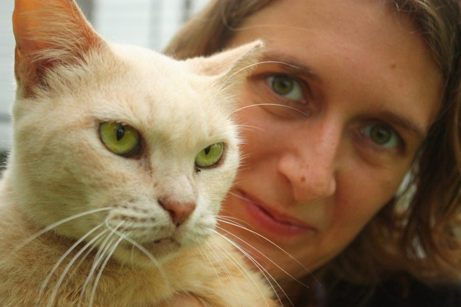 Pisică albă cu ochi verzi