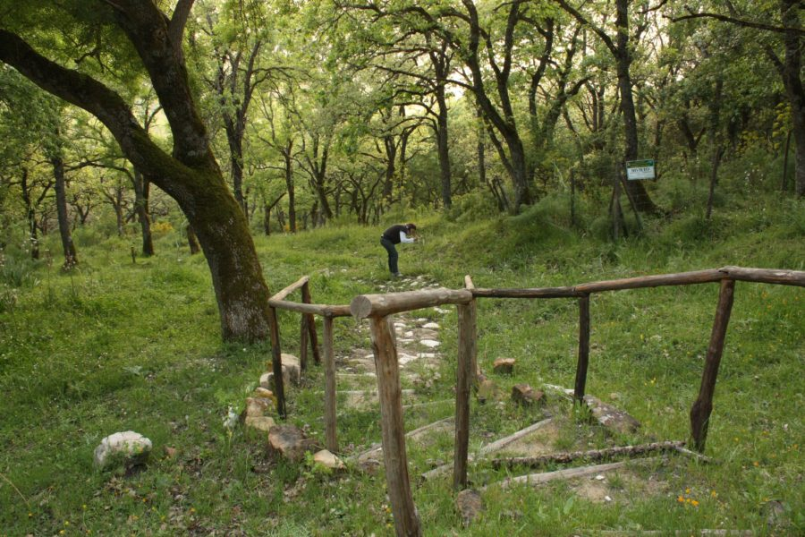 Pădurea Ficuzza, Sicilia