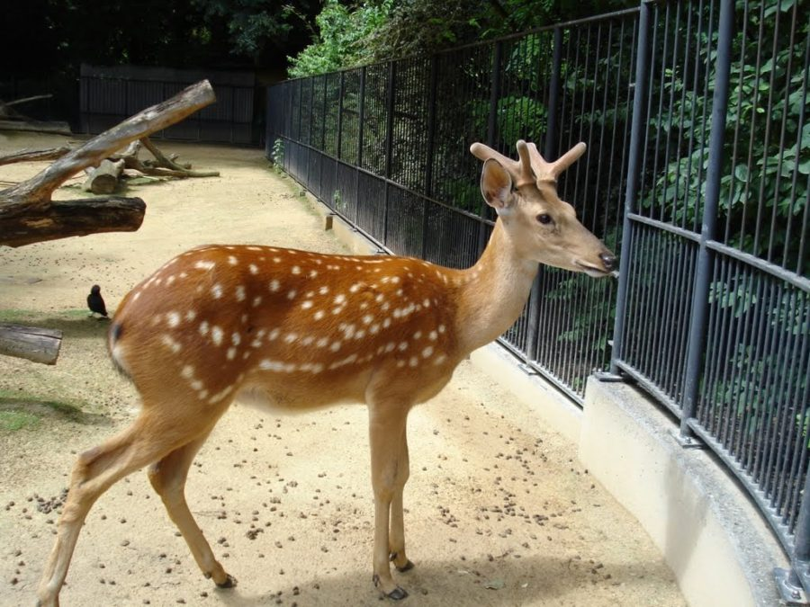 Grădina zoologică din Anvers, Belgia