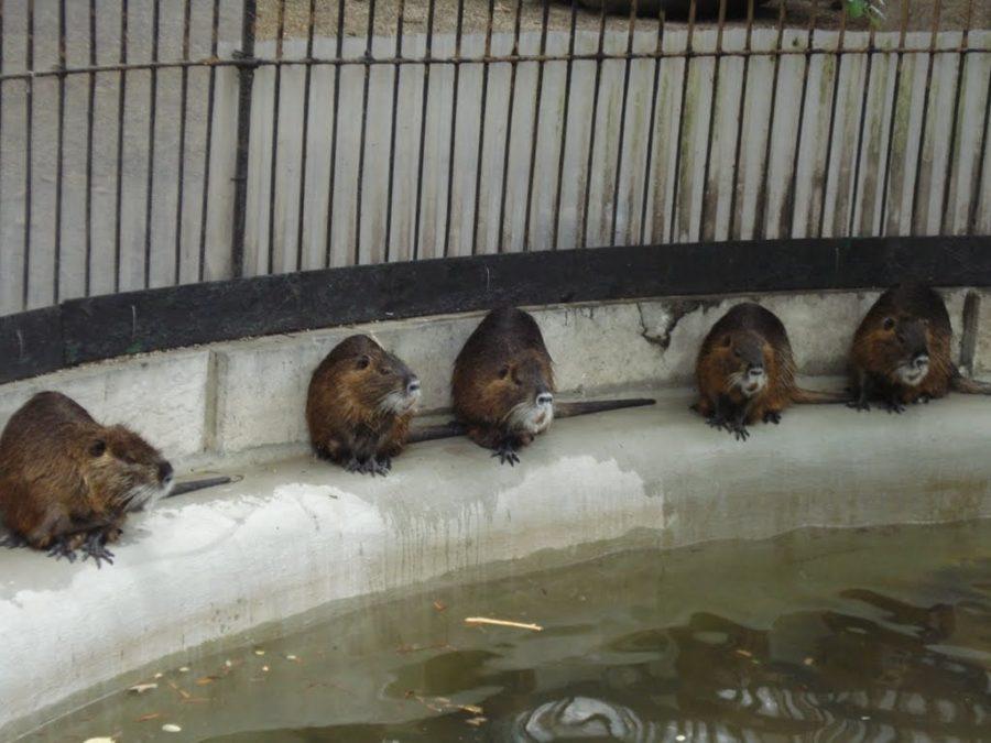 Grădina zoo din Anvers, Belgia
