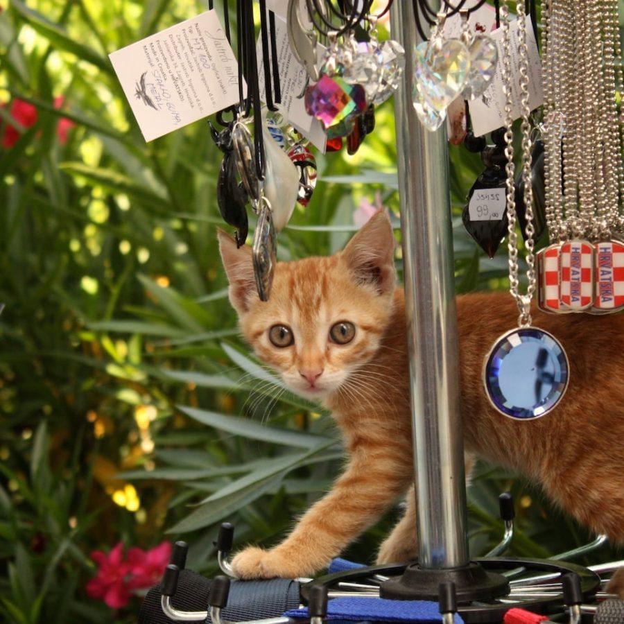 Pisică printre suveniruri, coasta Croația