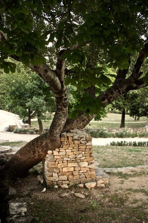 Copac înclinat susținut de un zid de cărămidă