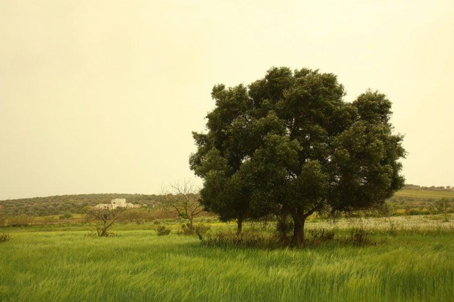 Lângă Pachino, la campagna