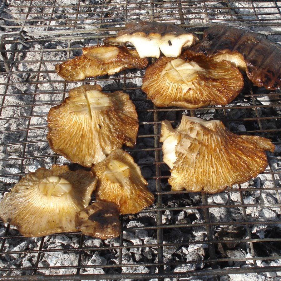 Funghi, ciuperci la grătar, Sicilia