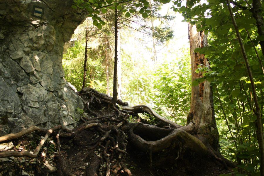 Pădure inverzită, Slovensky Raj