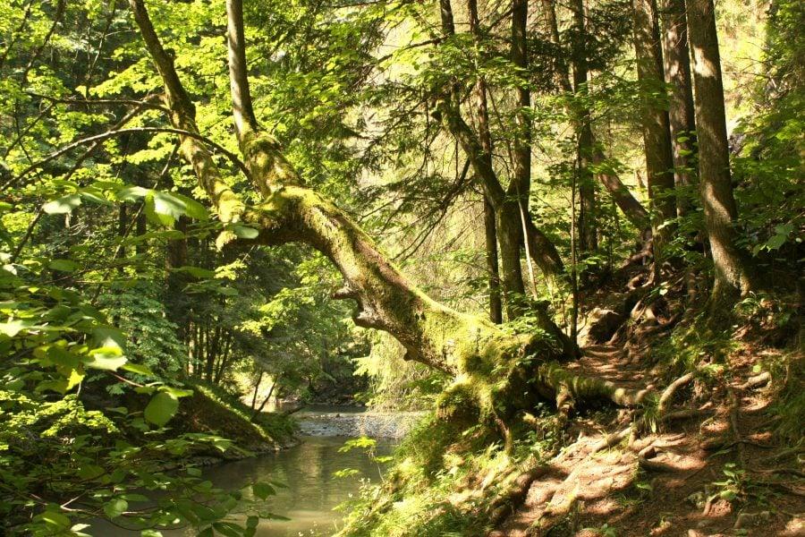 Prielom Hornadu, rezervația Slovensky Raj, Slovacia