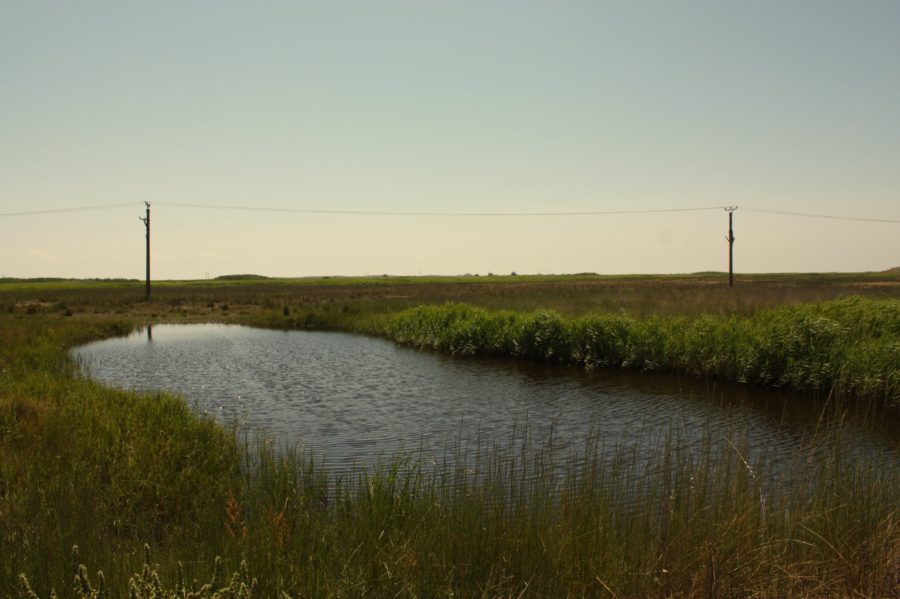 Inundație la Vadu, Rezervația Dentei Dunării