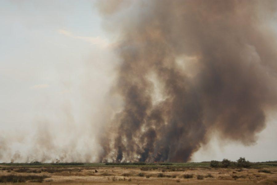 Incendiu la Vadu, Rezervația Delta Dunării