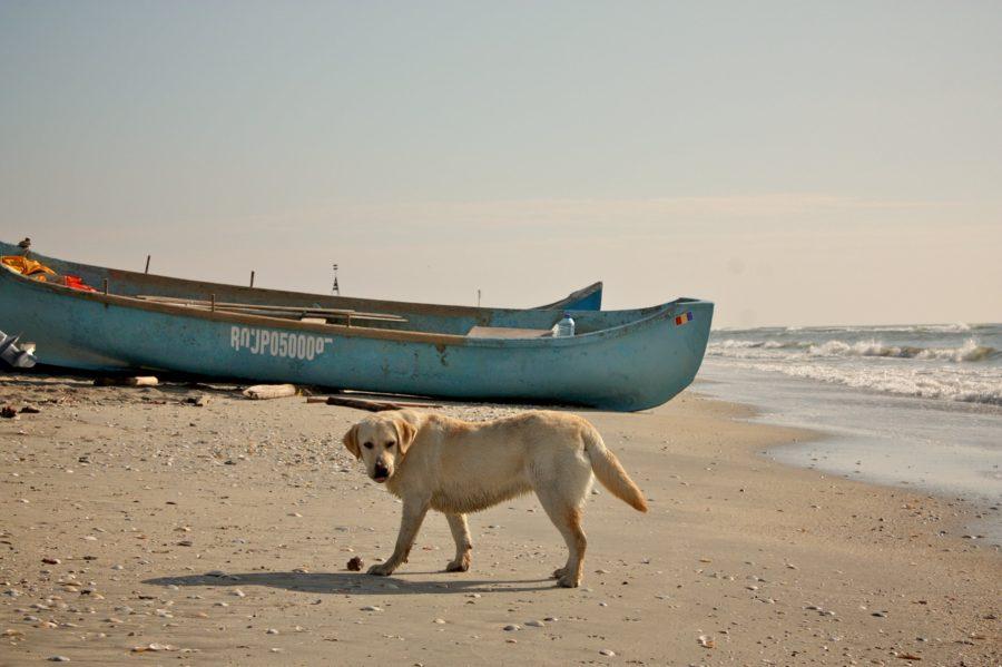 Câinii și bărcile pescarilor din Vadu