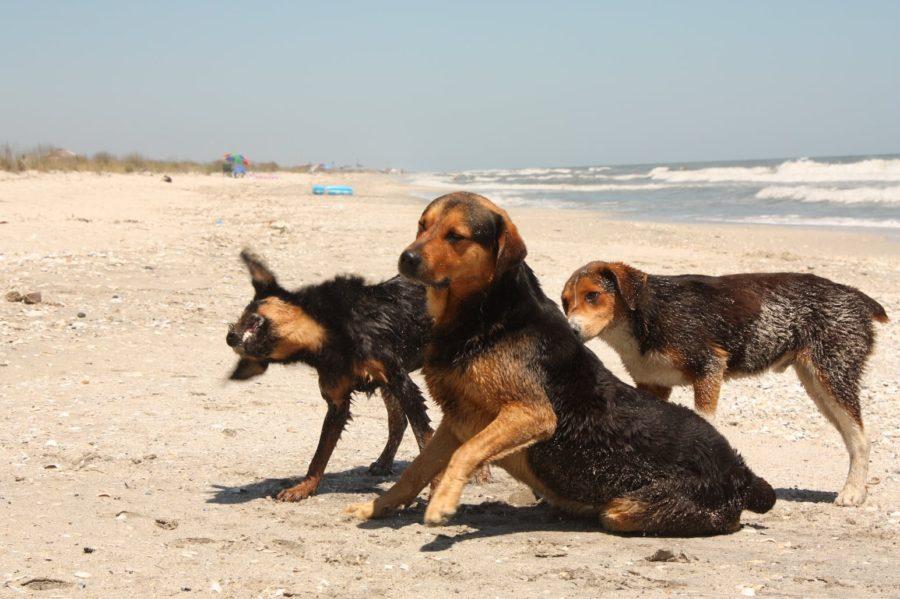 Câinii pescarilor din Vadu, Rezervația Delta Dunării