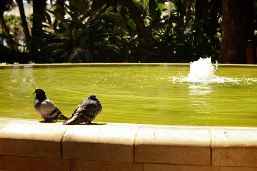 Fântână arteziană cu porumbei, Malaga, Andaluzia, Spania