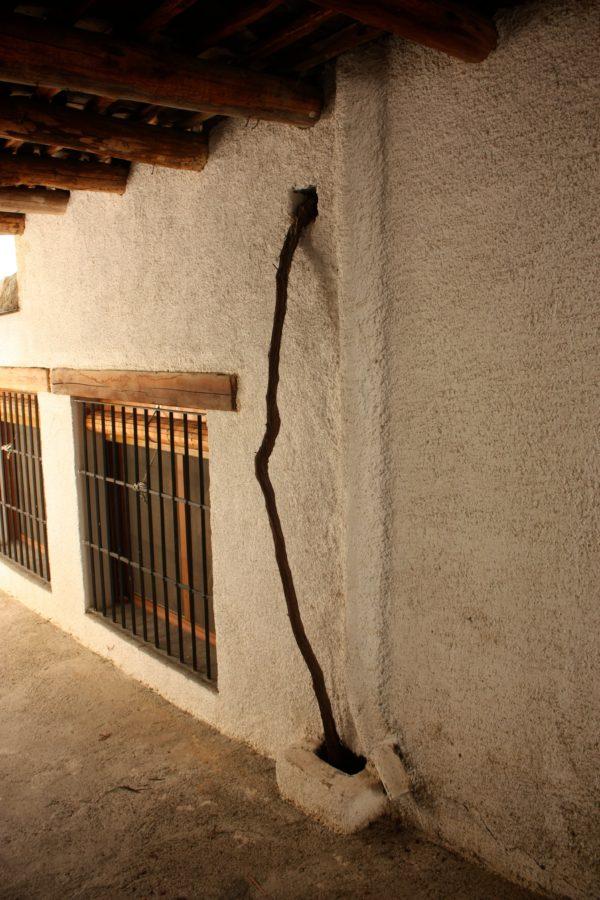 Butuc de vița de vie pentru terasă, Spania, Munții Alpujarra