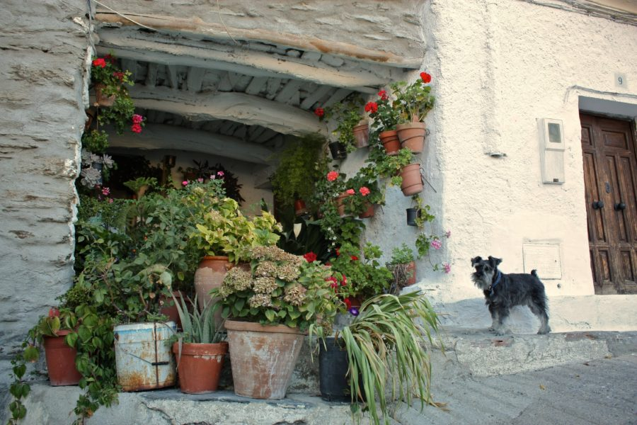 Flori pe strazile din Capileira, Spania