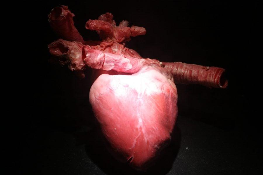 Inima umană în ceară. Pavilionul Corpul Uman, în Muzeul Științelor din Granada