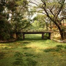 Canal cu vegetație, Allepey, Kerala, India