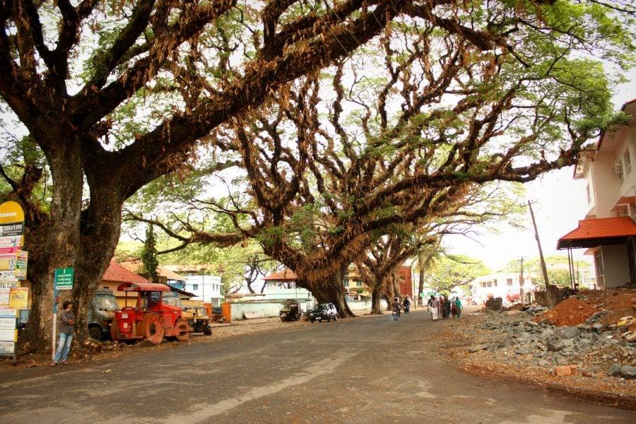 Copaci mari iî intersesecție în Fort Kochi (Fort Cochin), Kerala