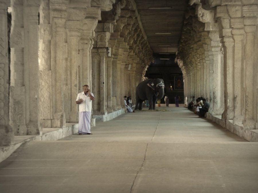 Elefantul templului Nellaiyappa, templul cu coloane căntătoare, Tirunelveli, Tamil Nadu, India