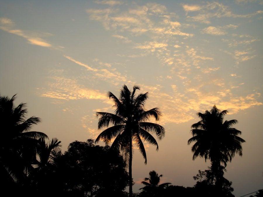 Palmieri la apus în Fort Kochi (Fort Cochin), sudul Indiei