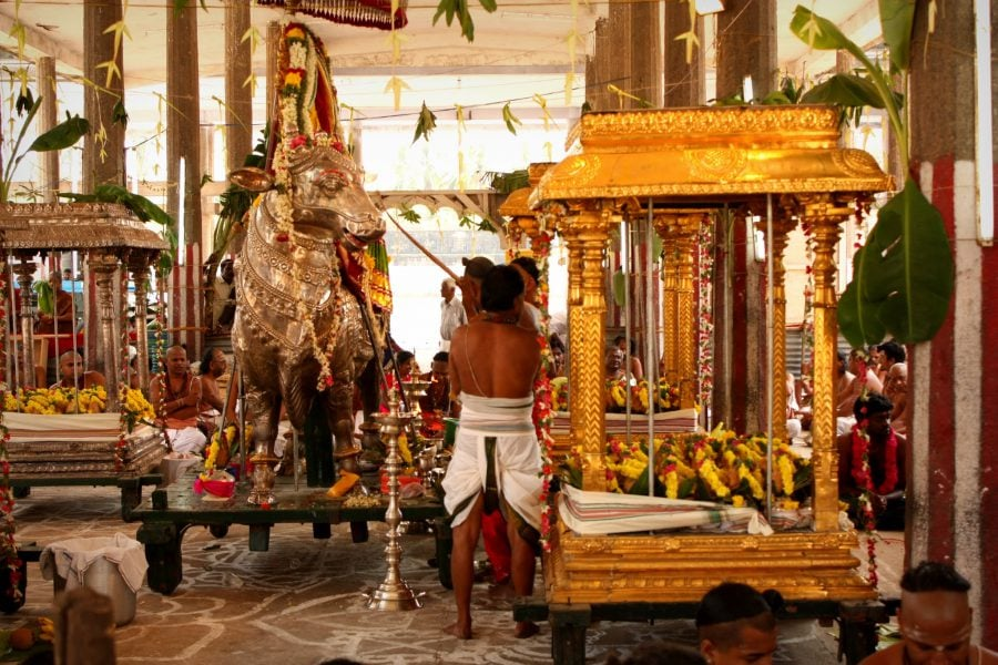 Ceremonie în templul Nataraja, Chidambaram, Tamil Nadu, India