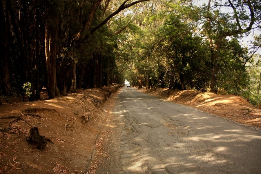 Drumul către vârful Doddabetta, Ooty, Tamil Nadu, India