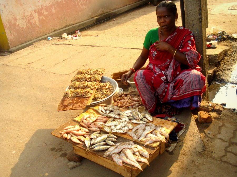 Pește și muște, zona săracă de lângă Pondicherry (Puducherry), Tamil Nadu, India