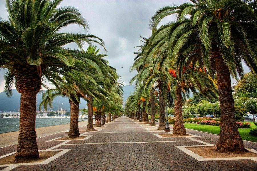 Palmieri langa portul din La Spezia, Italia