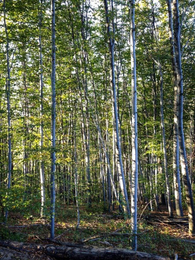 Pădurea din spatele casei