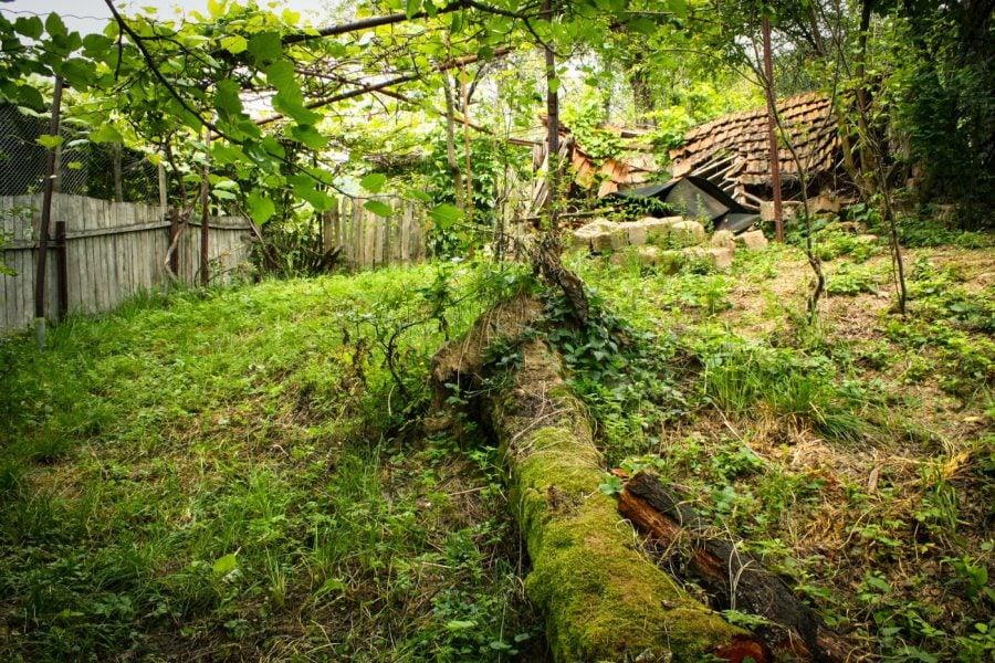 Copac cu muschi in curtea din spate (Bigar)
