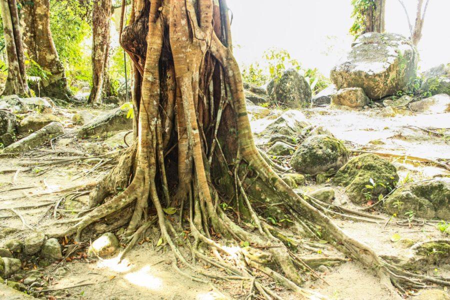 Copac în pădure propicală, Asia de Sud Est