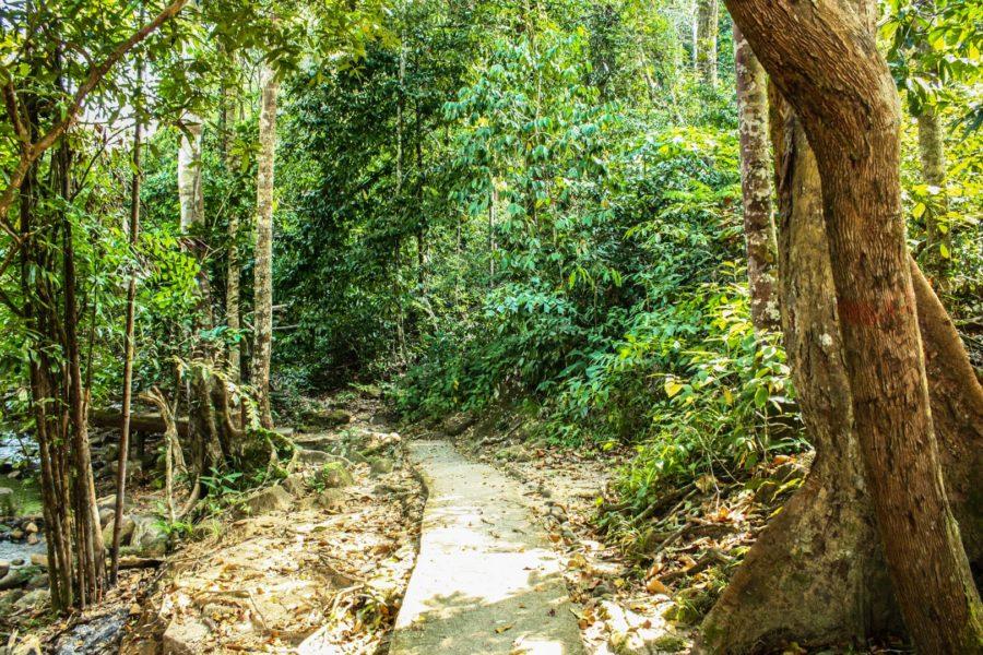 Potecă prin junglă, Langkawi, Malaezia