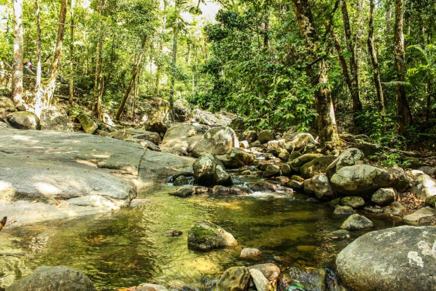Râu în pădure tropicală, Asia