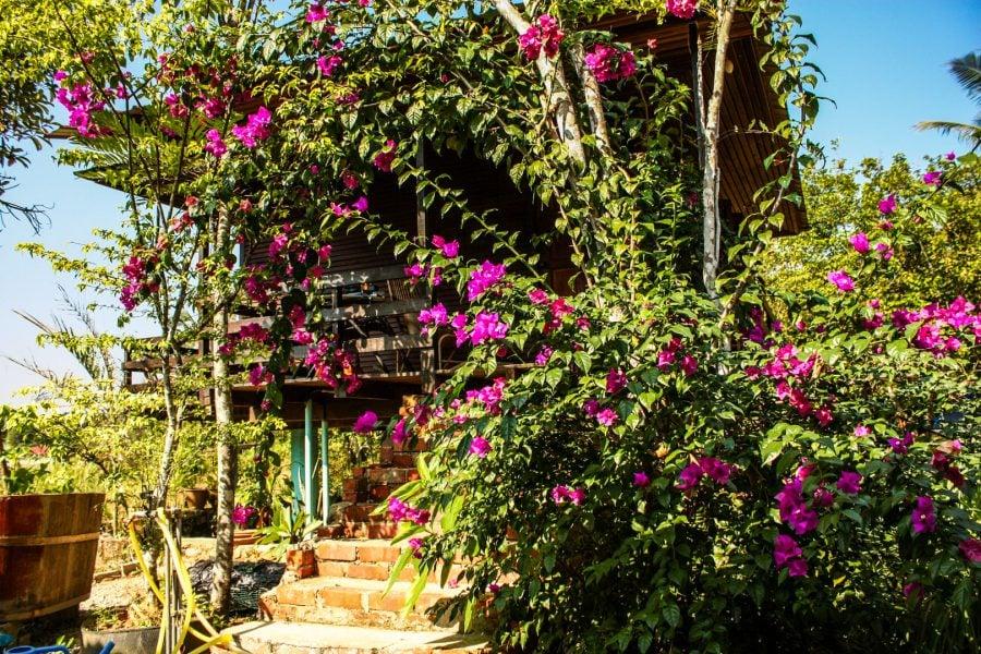 Flori de bughenvilea în fața casei